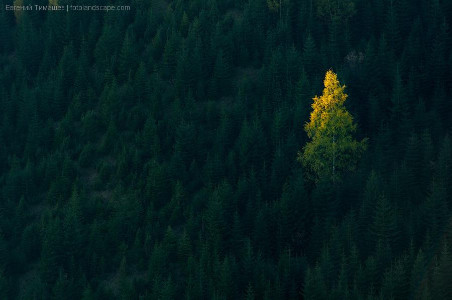 carpathians02_october_2011_DSC_0398222